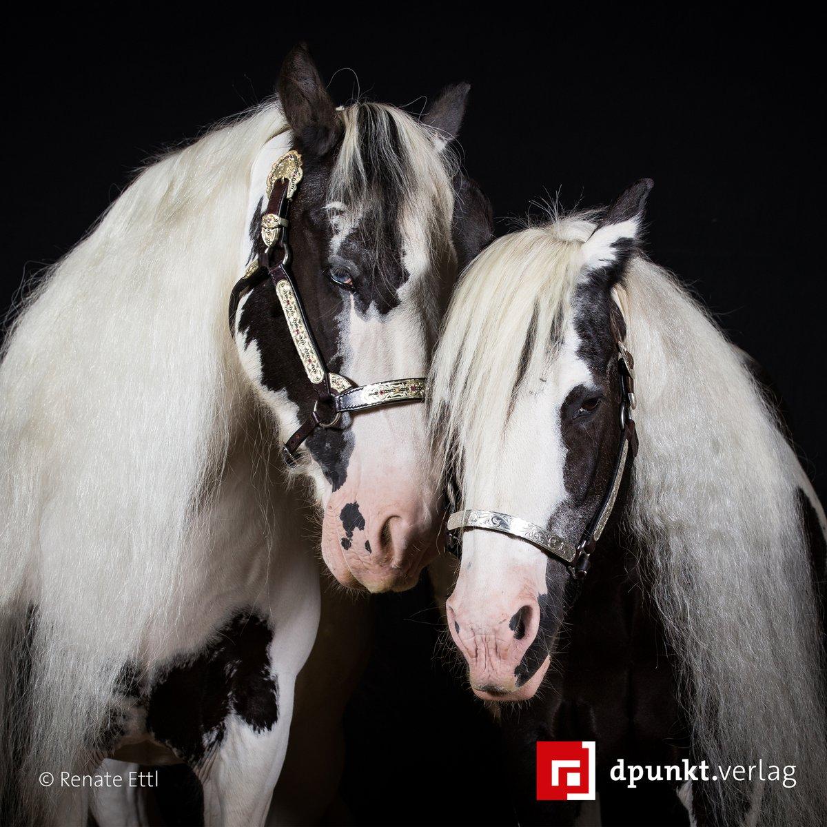Die beiden Tinker Chicco und Sparky sind unzertrennliche Freunde und zeigen ihre Zuneigung auch bei diesem Doppelporträt im Studio.  Mehr dazu in »Kreative Pferdefotografie«. #tierfotografie #lesetipppic.twitter.com/IeCYLcEEYf
