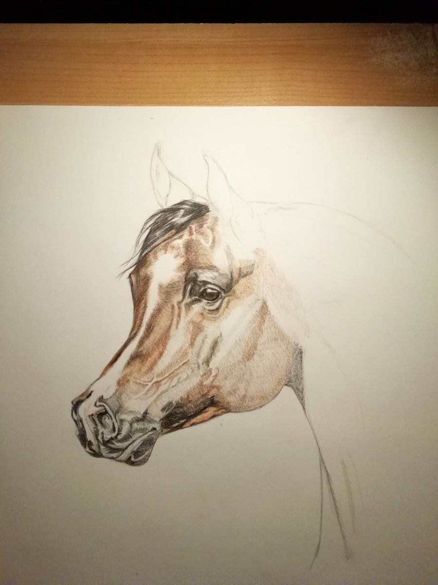 Progress so far..  It actually looks ok. I'm starting to like using colourpens instead of lead pencils. I hope I'm not going crazy frustrated before it is finished #ILoveHorses #LockedInArtClubpic.twitter.com/3fGR7HVeFP