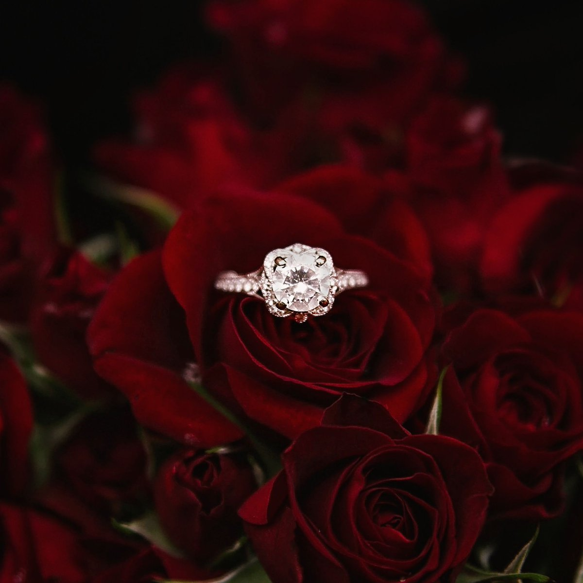 Did you say yes in #Anaheim? In honor of #ProposalDay, share your magical #SoCal proposal story with us! https://t.co/H1EhuEpx7e