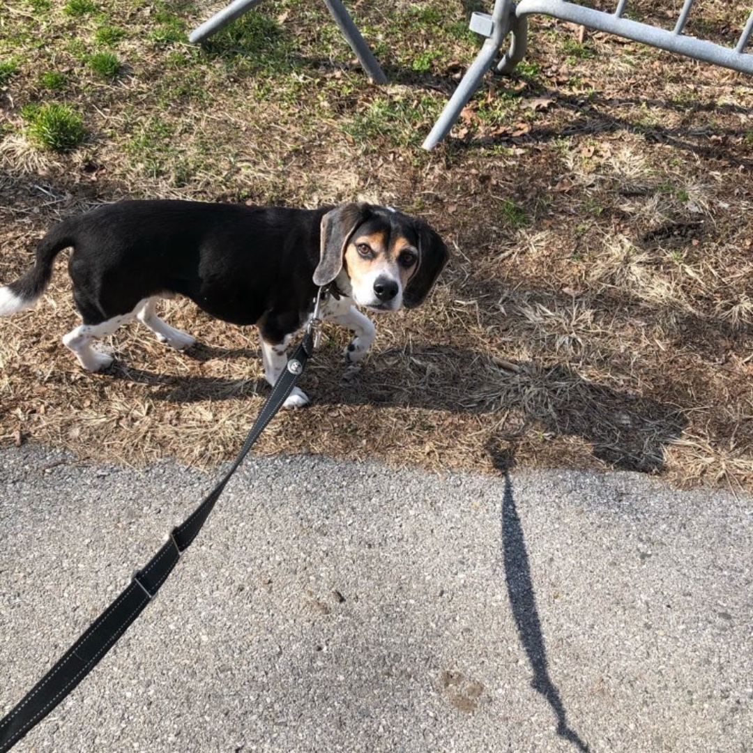 Darwin wishes you a happy weekend! #beaglemix #maythepawsbewithyou #lukedogwalker #dogwalkeruws #happydog #uws #doggy #doggo #furbaby #dogcity  #puppy #puppylover #ilovedogs #sweet #whatabeauty #nycitydog #sweetdoggo #endoftheday #cutedog #cutepic #dogsofinstagram