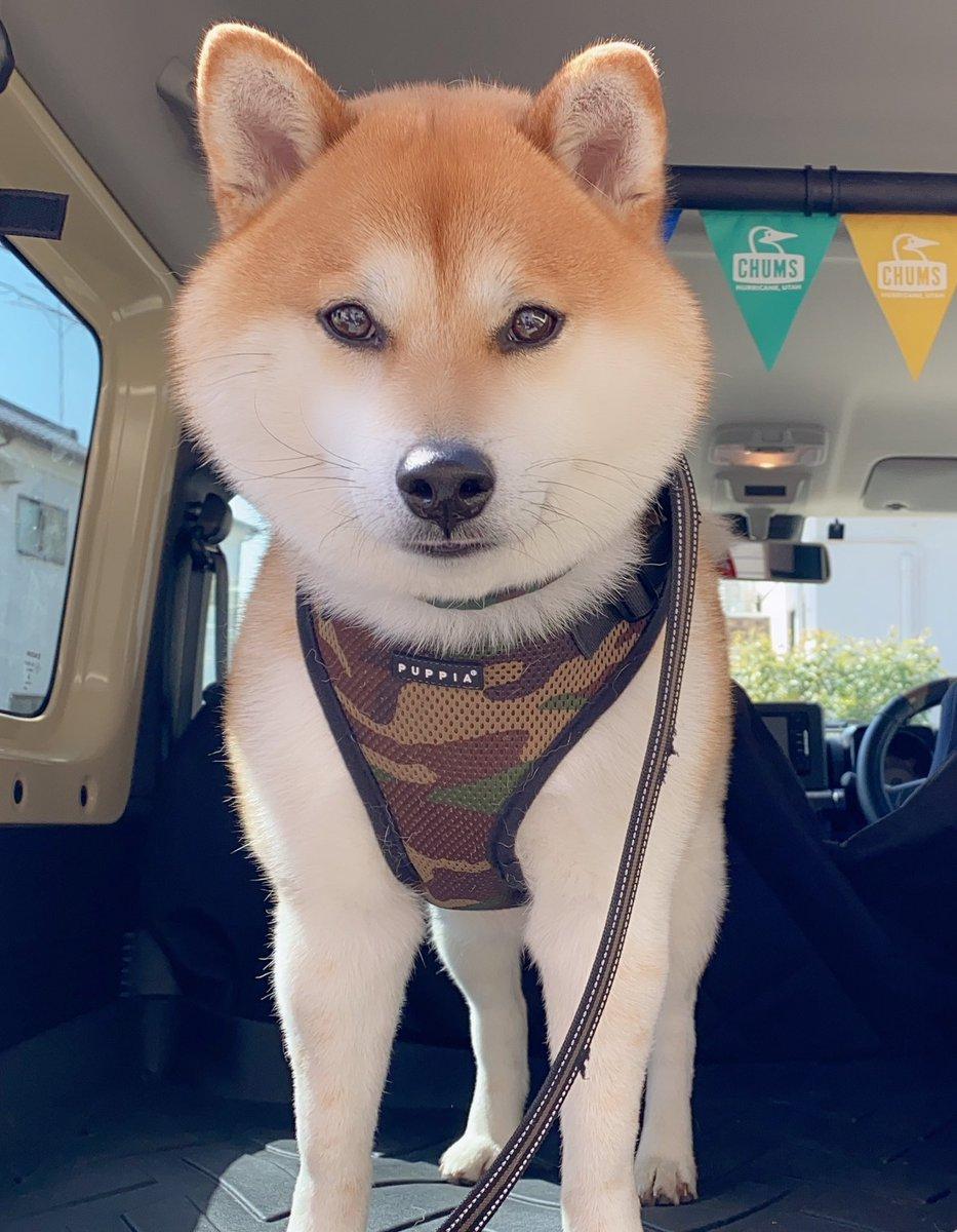 犬 おっさん と