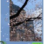 100日後に死ぬワニが完結した結果?桜の写真送るのが流行り始めた!