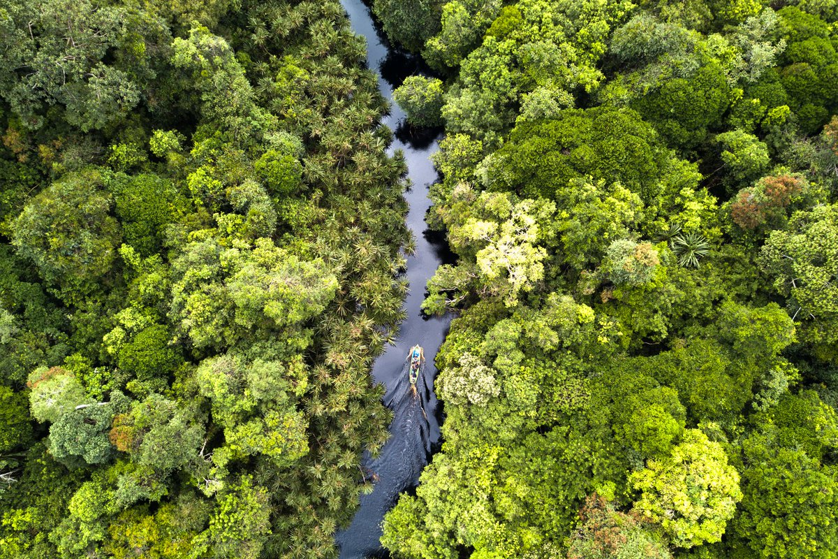 Happy #InternationalDayofForests! Did you know that #forests are the most biologically-diverse ecosystems on land? We hope you continue to support our efforts to #restore & #protect forests in Riau, making them habitable for almost 800 #species of #flora & #fauna ! #explorererpic.twitter.com/c2Z9j9fOYW