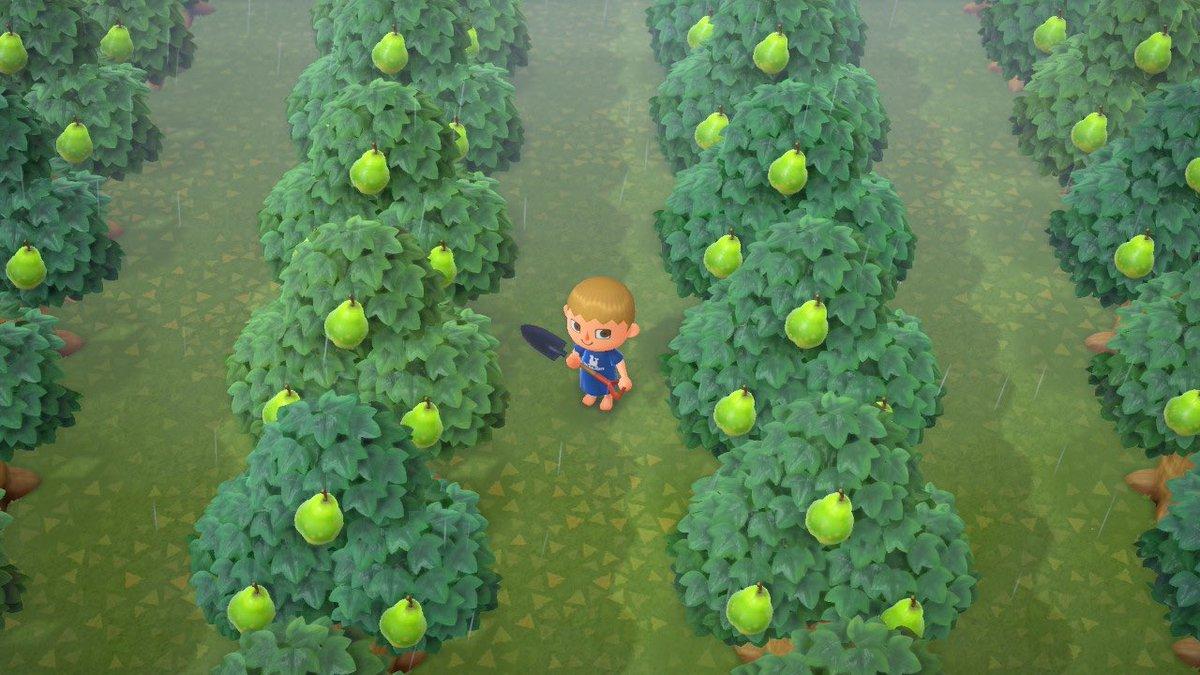 フルーツ あつ ない 森 育た