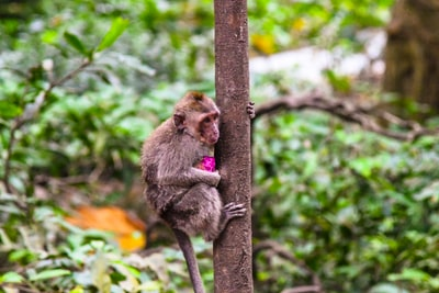 Photo By Bao Menglong | Unsplash - via @Crowdfire    #indonesia #babyshopping #trendybaby #animalbehavior #ananimalpic.twitter.com/5XgiyCUBD0