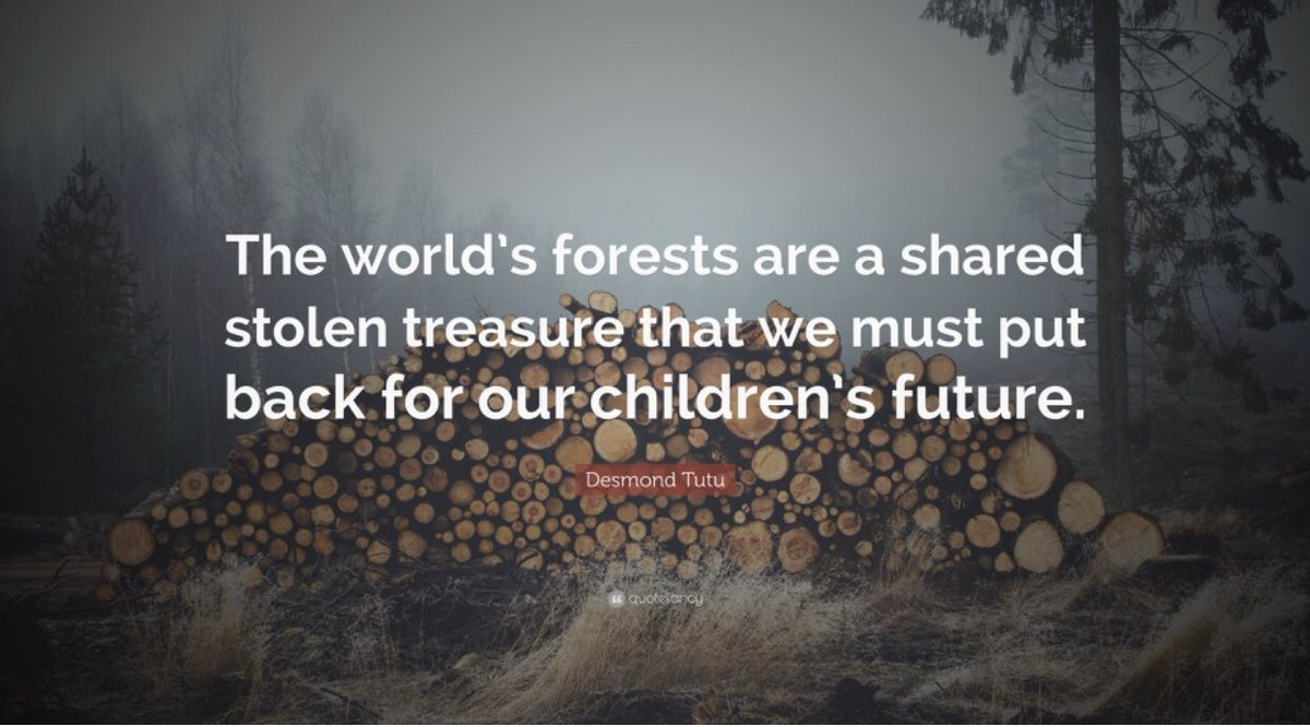 Happy World Forest Day 🌳🌳🌳