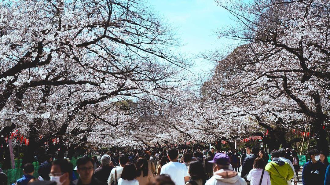 Как получить Гостевую визу в Японию из России