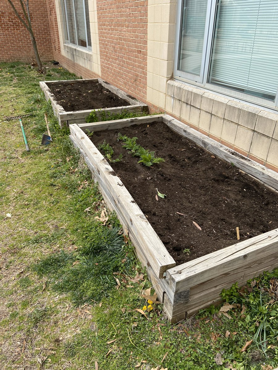 Nottingham ES's spring garden has been seeded with beets, carrots and greens - all of it for AFAC. APS families and staff, can you grow a row for AFAC? Tweet photos of your gardens. <a target='_blank' href='http://search.twitter.com/search?q=APSgrowsforAFAC'><a target='_blank' href='https://twitter.com/hashtag/APSgrowsforAFAC?src=hash'>#APSgrowsforAFAC</a></a> <a target='_blank' href='http://twitter.com/AFACfeeds'>@AFACfeeds</a> <a target='_blank' href='http://twitter.com/APSVaSchoolBd'>@APSVaSchoolBd</a> <a target='_blank' href='http://twitter.com/APSVirginia'>@APSVirginia</a> <a target='_blank' href='https://t.co/lS8eg19eAP'>https://t.co/lS8eg19eAP</a>