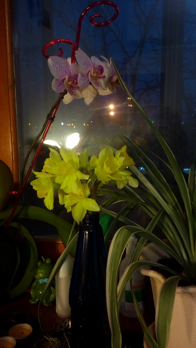 интересное, что фотографии пустоцвет у орхидеи счастью