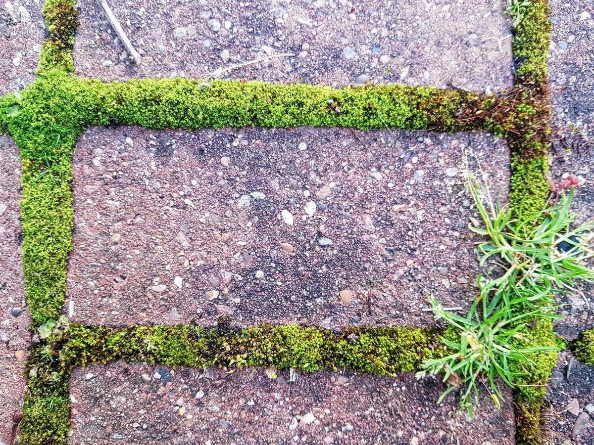 Ross Cloney On Twitter Moss Brick Preserved Lemons Homemade