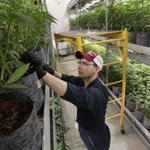 Image for the Tweet beginning: Pennsylvania's medical marijuana dispensaries considered