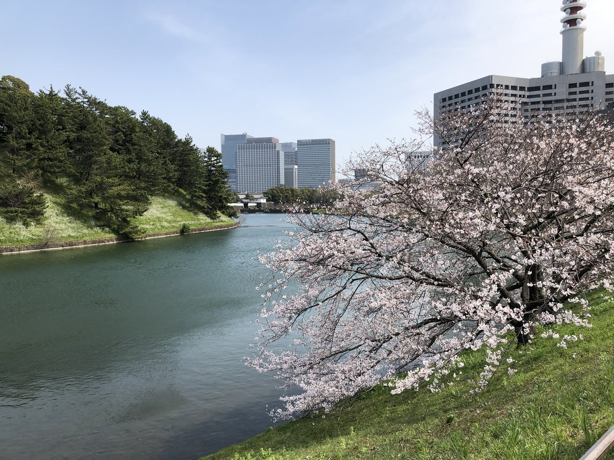 Sakura flowers popping up in Tokyo amidst the virus gloom .. nature takes and nature gives back #Tokyo pic.twitter.com/gW3Inj04Zb