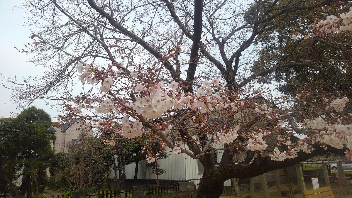 同期 の 桜 歌詞