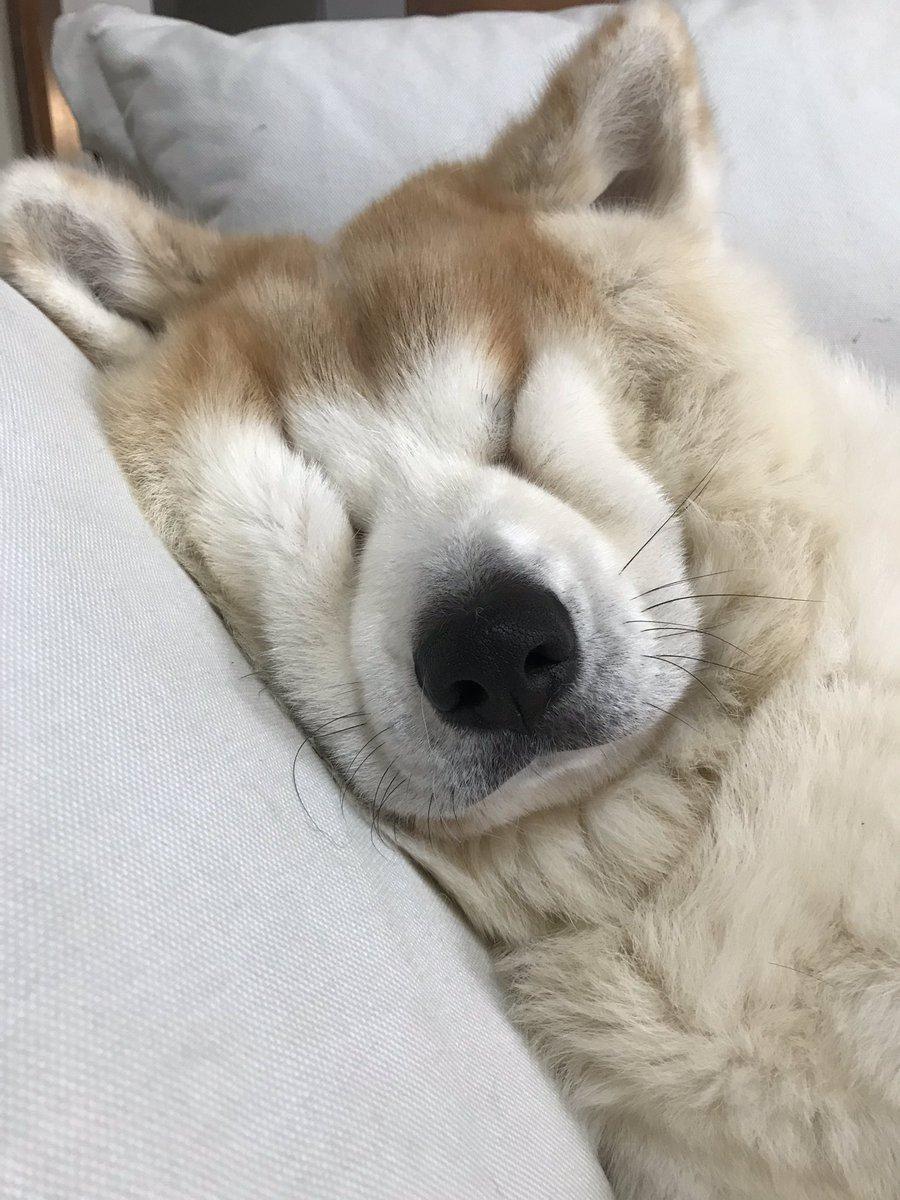 が 寝る 音楽 犬