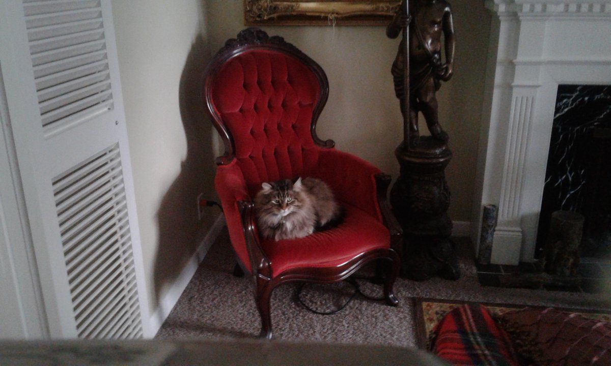 @johnstf Here he is...Maine Coon (estimated 7 or 8 when he adopted.) He is approx 10 yrs young now.