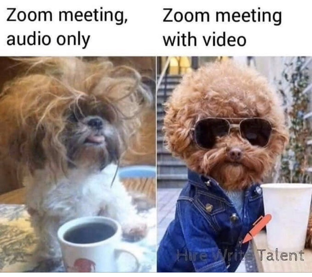 Image result for dog video zoom meeting image