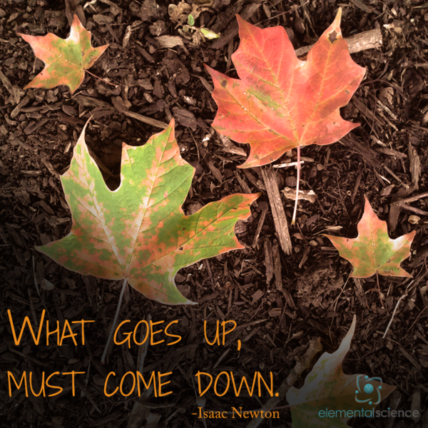 """What goes up, must come down."" - Isaac Newton https://elementalscience.com/blogs/quotes-for-science/66692547-what-goes-up … #sciencequotes #inspirationalquote #scientistspic.twitter.com/lXnOR51oDg"