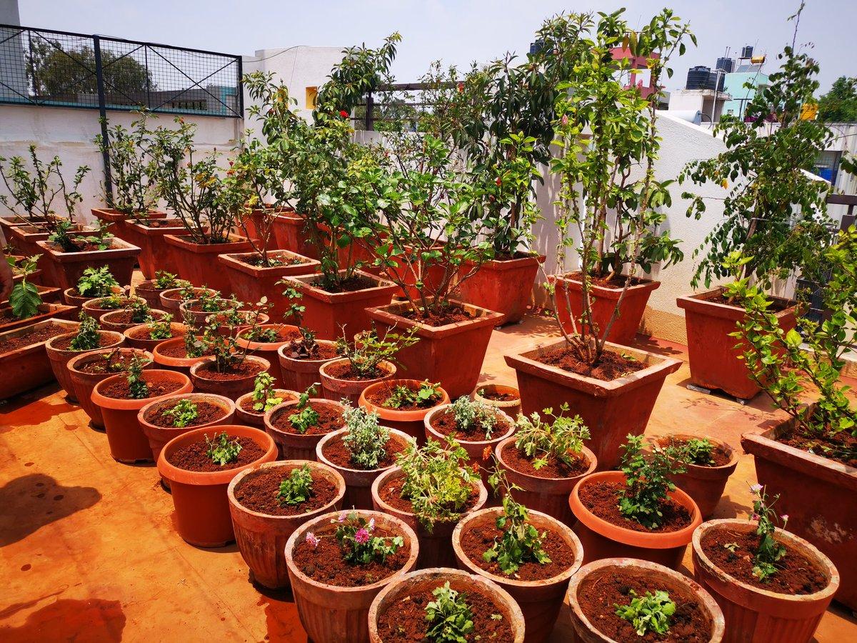 Used this free time in gardening, Repoting and planting new vegetables plants. Entire family working together, 2days of hardwork #Amma  @iswapnakrishna @devkrish14   #Ashu #Riya #Rittu #Raghav #teju #https://photos.app.goo.gl/BUpUGxu1Bp4iVJDP7