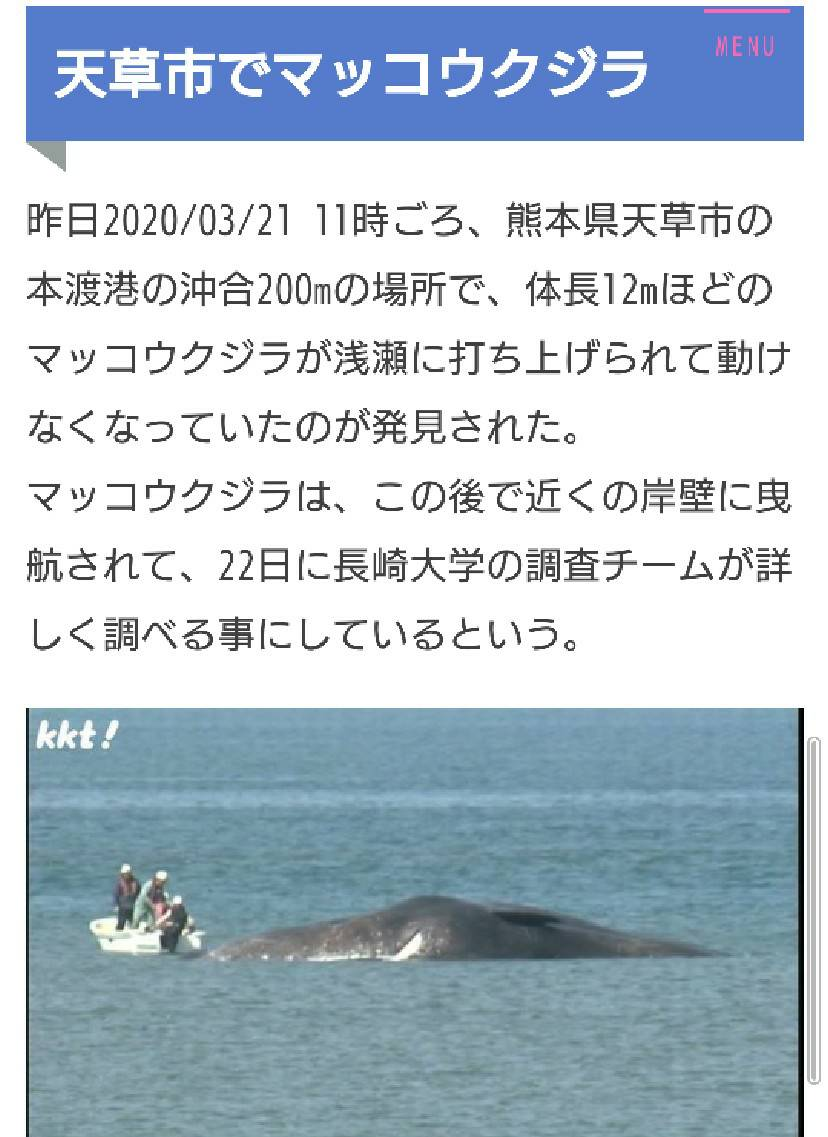 天草 クジラ