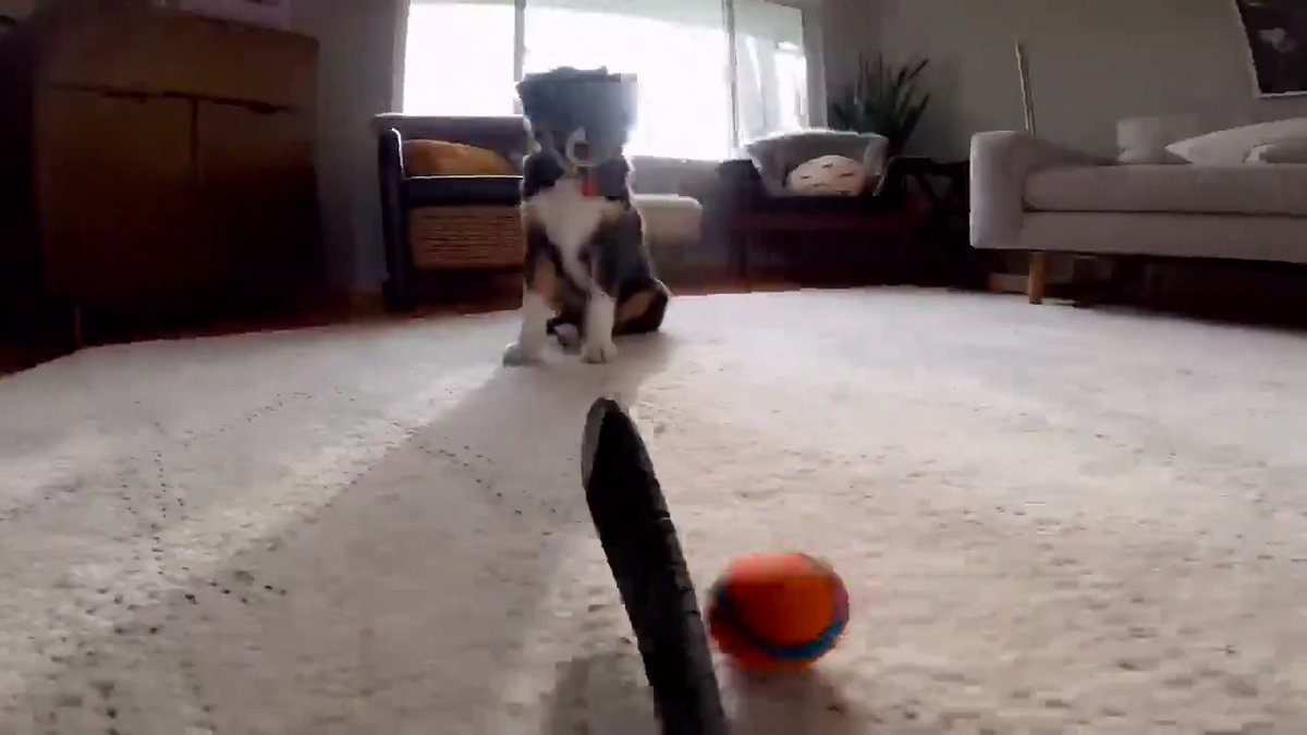 when #nationalpuppyday meets #hockeyathome. 😍🐶🏒 now send us your puppy pics, pls.