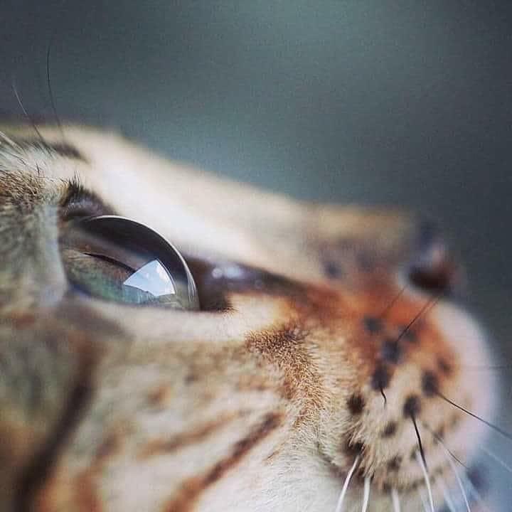 Magnifique 😻💖💖 #animaux #chat #potichat
