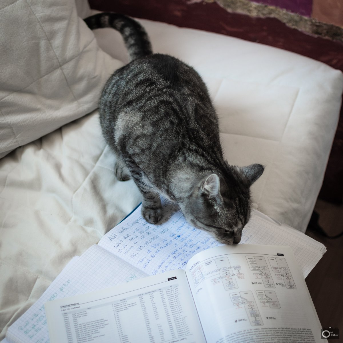 One week of home office, my cat is trying to bring new ideas to the hydrogenase wrold.