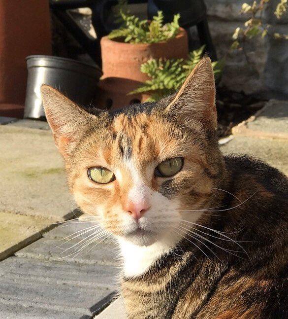Here's a cat pic  #CatsOfTwitter #cats #Feline #animalphotography #petspic.twitter.com/VspxxEgaFW