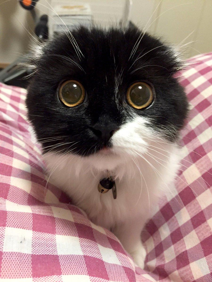 突然の蔵出し、再び。ネコ+丸いって最強な気がする。丸くなって寝てるネッコとか。背中の丸みとか。手先の丸みも。全てが最高。ということで、丸さ選手権こぶちゃん優勝。(独断すぎ)丸い!丸い!!ささくれてく心が丸くなるよ。
