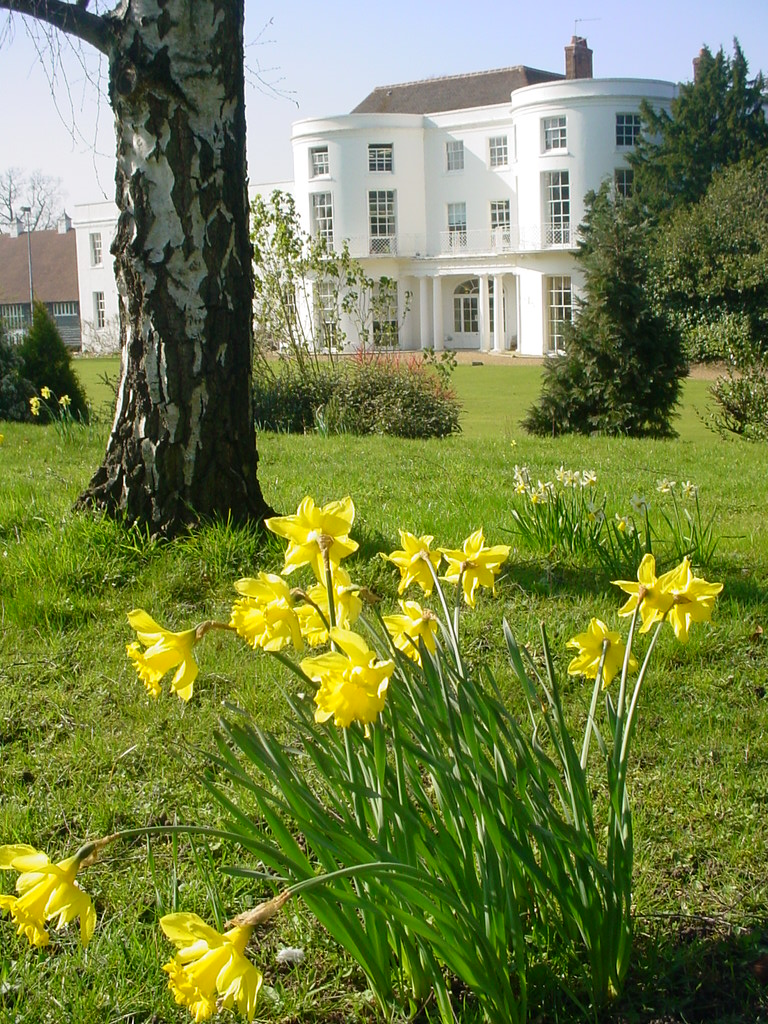 Daffodils in the meadow in the sunshine. Remember these as you walk down to school ?... Happy #EasterHolidays everyone #Bookham #SurreyGirlsSchool #TuesdayThought