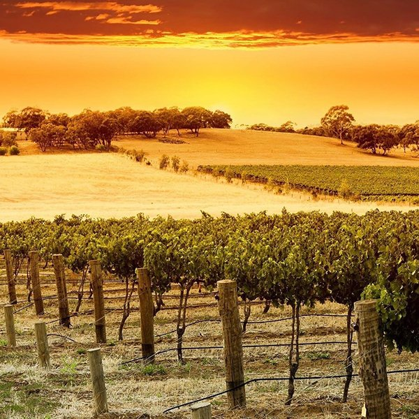 Barossa, you never disappoint!  . @viatortravel #winetasting #winelover #winery #winetime #instawine #winecountry #winelovers #winetime #vineyard #wineclub #winegeek #drinkingwithaview #winetravel #barossavalley #australianwine #winesunset #barossasunset #getwinesdirectpic.twitter.com/jeglne50Rl