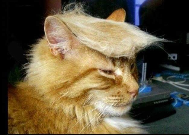Trump 2020.  Now, that's a bad ass cat.  #CaturdayEve <br>http://pic.twitter.com/NG135wf4P1
