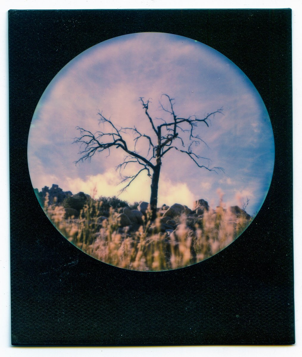 The Survivor (2020) Pioneertown, California my round frame #Polaroid pic.twitter.com/HuFgqRHIY7