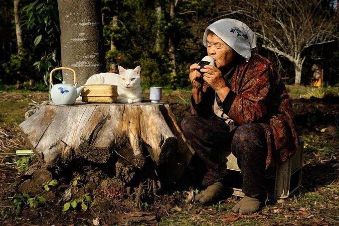 Tea time, Miyoko Iharas photographic series on her grandmother, Misao and her beloved cat Fukumaru, which began in 2003 #womensart