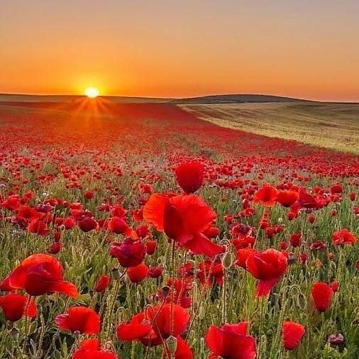☀ Sunset with red flowers.   #marrakechdesertexcirsions #atlastrekking #berbervillage #sunset #maroc #veiw #berber #atlasmountainsmorocco #besttours #travel #trips #toursfrommarrakrch #bestview #travelgram #memories #morocco #africa #morokko #hightatlas