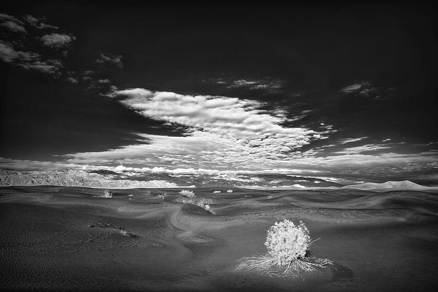 Art for the Walls!  #art #photography #landscapephotography #blackandwhite #picoftheday #artwork #fineartamerica #fineartforsale #California #desert #naturelovers #nature