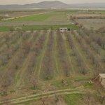 Image for the Tweet beginning: Benim güzel bahçem #KirazDiyari yazın