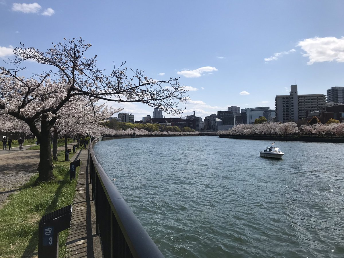 Today's cherry blossom. I see this landscape every day. #Japan  #osaka #sakurapic.twitter.com/ruJk940JcH