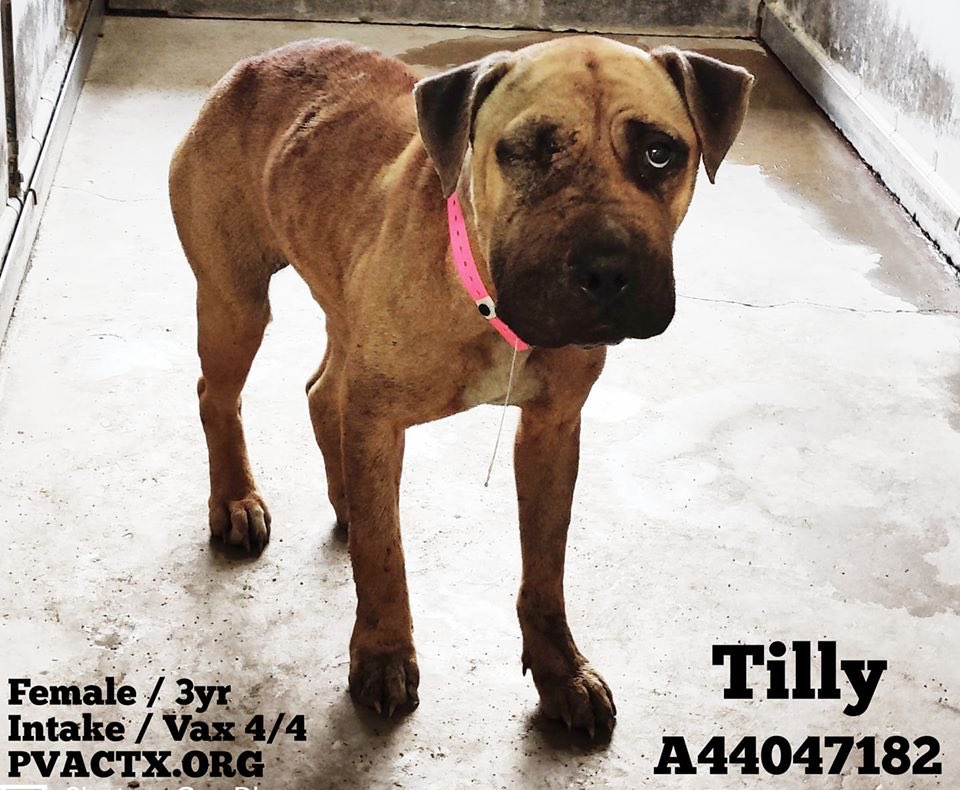 Gorgeous Tilly & Rex will if no1 comes  Will you look at them—I mean really look into their eyes  These beautiful pups have done nothing wrong  They just want &amp; treats & toys & the of 1 decent human  The #RioGrandeValley is #HellOnEarth4Pups <br>http://pic.twitter.com/A9lAix5E2I