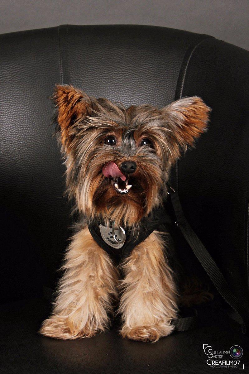 « Les chiens ne mentent jamais quand ils parlent d'amour »  Aperçu d'une séance photo en famille, de Décembre 2019, ou même le chien était présent !  #creafilm07 #chien #dog #shooting #shootingphoto #instadogs #yorkshire #lepouzin #ardeche #instafamille #instafamilypic.twitter.com/N2Nz9rBaep