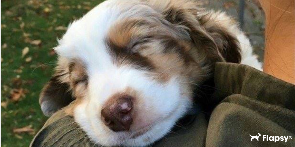 Sunday Mood  Want to read up on some interesting facts about your furry companion? Check out our blog!  https://blog.flapsy.com/ #flapsy  #flapsypetcare #dogoftheday #doglover #doglovers #doglife #doglove #dogmom #doggie #doggos #dogtreats #petlovers #petoftheday #dogs #puppic.twitter.com/XWWfQA9eeY