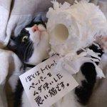 犯人確保!トイレットペーパーをボロボロにした猫ちゃん!