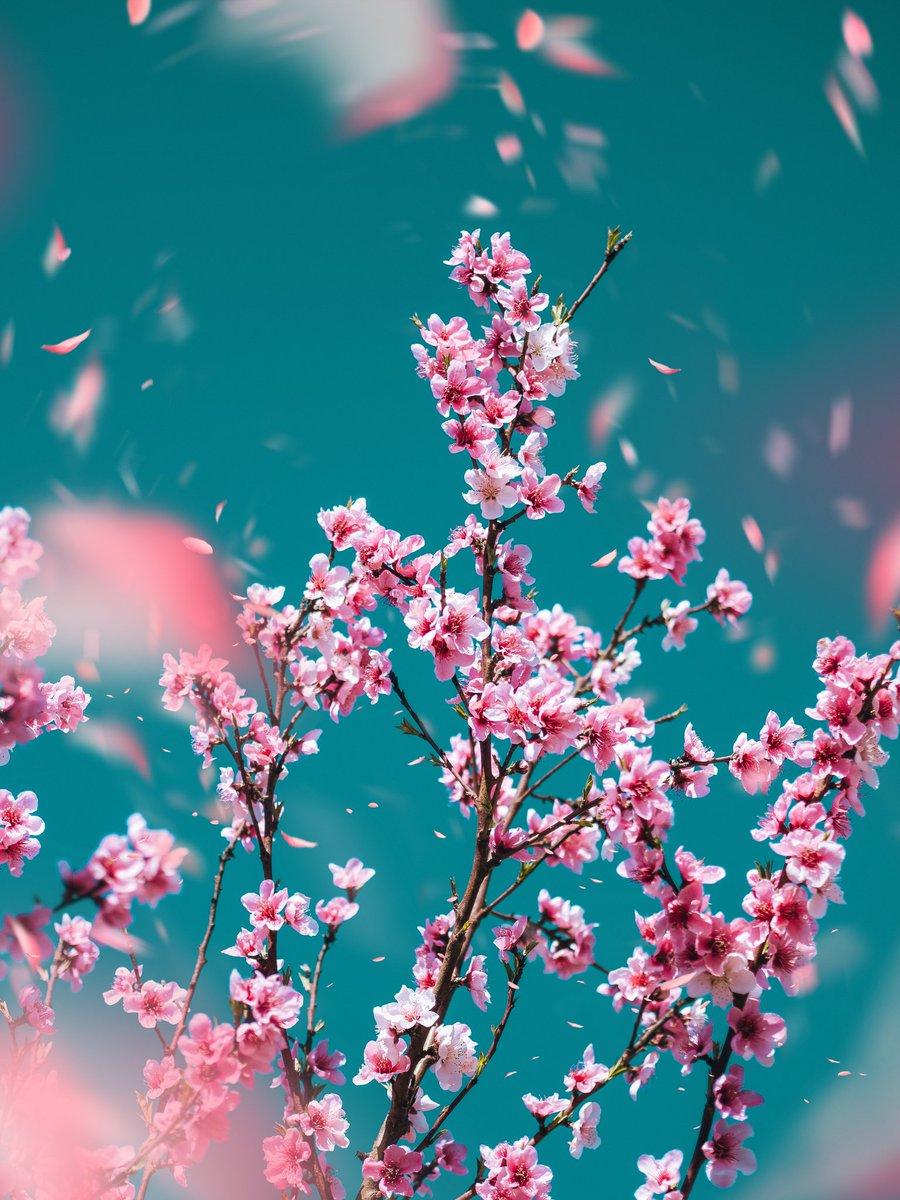 Malgrat tot, esclata la primavera. pic.twitter.com/bq8PsJr4UP