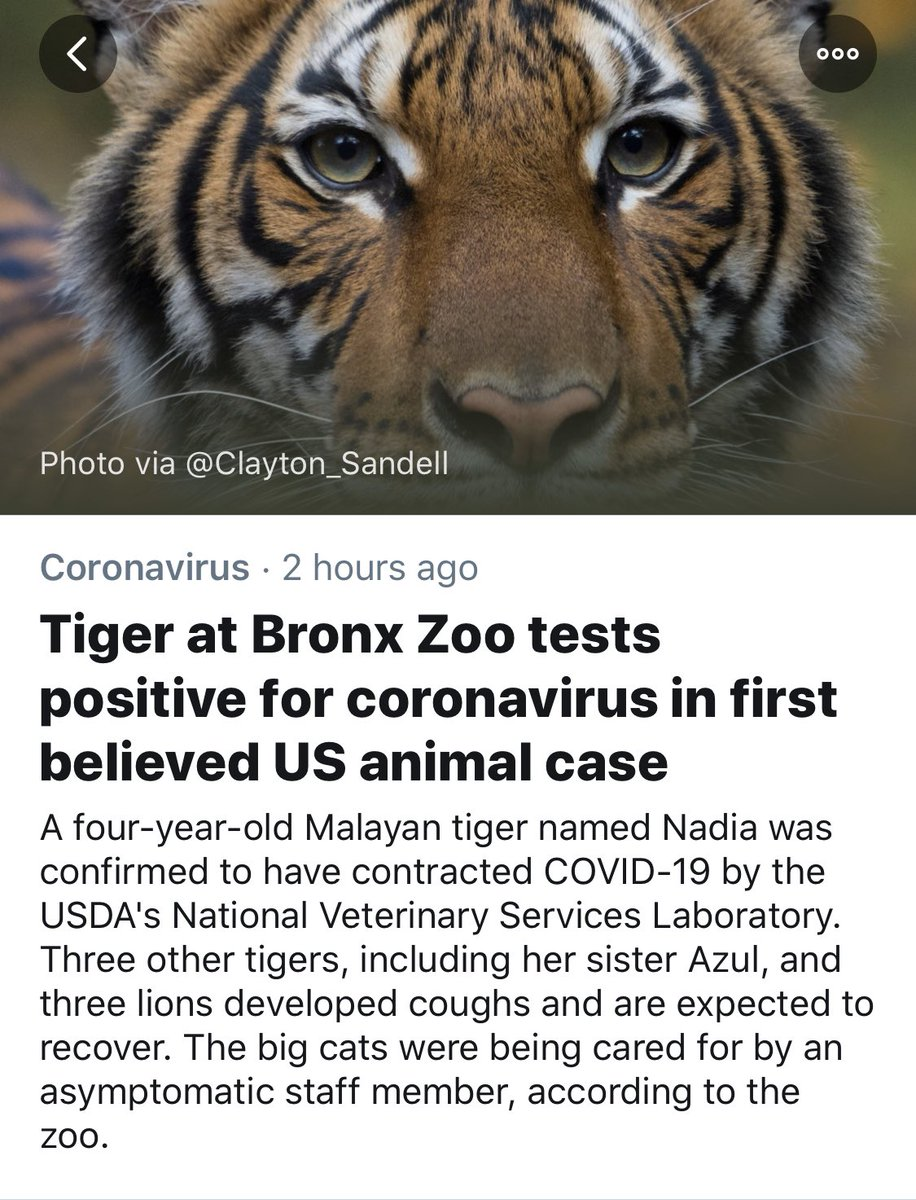 And they originally said Animals cant get it...So basically nobody knows anything 🤦🏾♂️