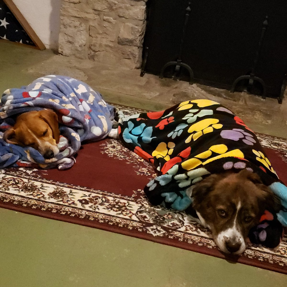 CUTENESS alert!The boys are so spoiled Their blankets just came out of the dryer, so now it's naptime#redh_realtor #realtorlife #cincinnati #mthealthy #mypeace #thankful #puppylove #jasper #ripley #puppylife #adopt #rehome #rescue #rescuedogsofinstagram #dogsofinstagrampic.twitter.com/YatX2jdBxy