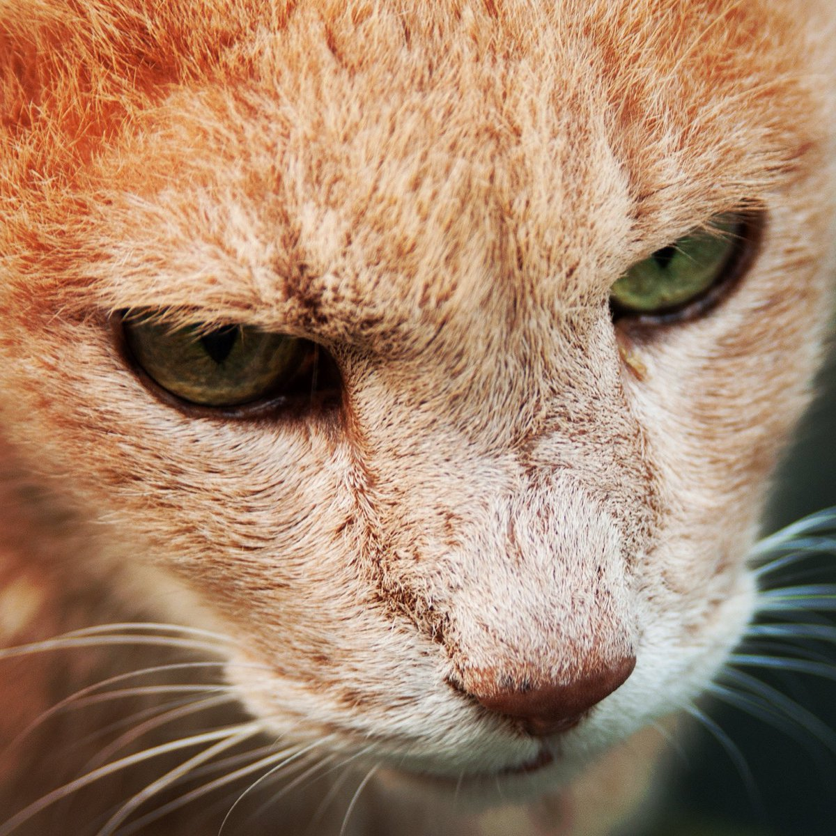 The face  #snapshot #cat #face #写真好きな人と繋がりたい #写真撮ってる人と繋がりたい #キリトリセカイ #ファインダー越しの私の世界 #半径500mのワンダーランド #東京カメラ部 #東京写真部 #pashadelicpic.twitter.com/Ny8SgmiFHA