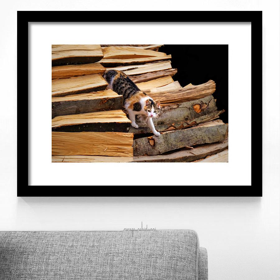 'Stepping Down - Calico Cat on Beechwood Pile' by Menega Sabidussi #framed #artprints #wallart #decor #interiorart #cats #felines  https://fineartamerica.com/featured/stepping-down-calico-cat-on-beech-woodpile-menega-sabidussi.html…pic.twitter.com/RLoSFtpDJL