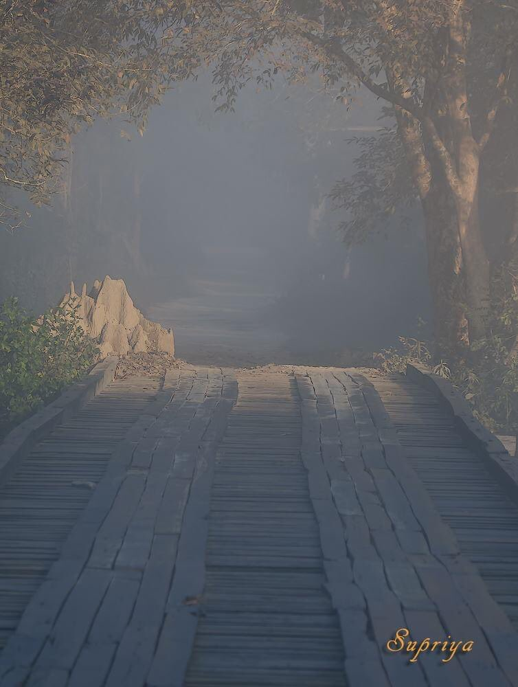 Missing forest .... This was a beautiful misty morning in Kaziranga National Park, India  Misty mornings with soft light and the woody aromas life feels satisfied.   #KazirangaNationalPark #misty  #nature #naturelovers #NaturePhotography #canonphotography #canonIndia #natgeopic.twitter.com/e7PZnKklAJ