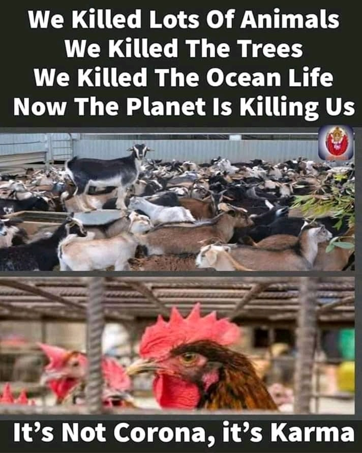 #veganlife #veganism #veganNews #veganinformation #veganteach #veganpower #veganlslove #veggies #vegan #vegancommunity #ruvegans #plantbasednews #veganlove #animal #animals #plantbased #crueltyfree #veganlove #ethicalvegan #veganfriendly #veganworld #veganas #easyvegan #veganlifepic.twitter.com/qn5qStTTaX