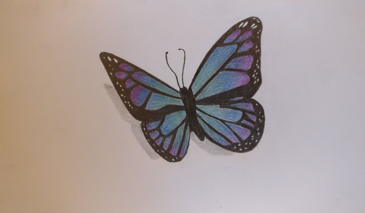 #drawing #traditionalart #pencildrawing #colors #butterflypic.twitter.com/YgEJNXXuOr
