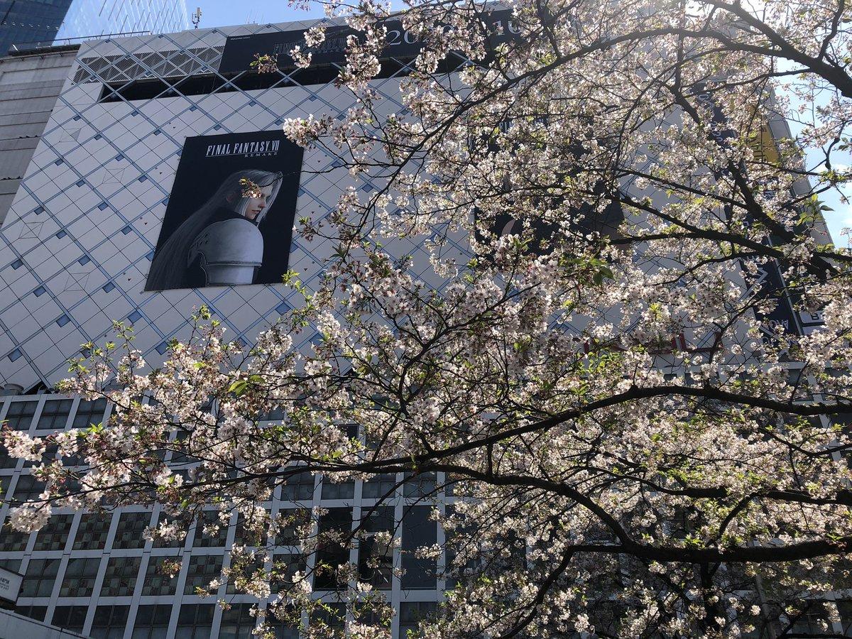 桜と、セフィロス様〜❣️